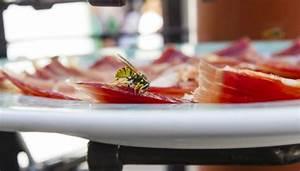 Was Essen Wespen : wespen verhaltsregeln beim essen im freien extra teller co codecheck info ~ Frokenaadalensverden.com Haus und Dekorationen