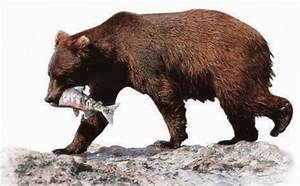 luisminglish - Science: Herbivores, Carnivores and Omnivores