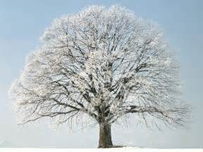 how trees survive winter westchester tree