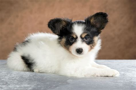 Cute Small Dog Breeds Puppies