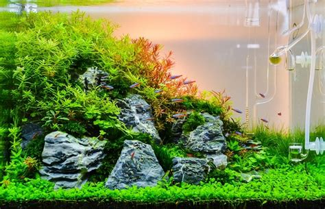 Best Substrate For Aquascaping by Aquascaping Your Aquarium Complete Guide To Planted