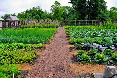 The Vegetable Garden And The Season's First Harvest The
