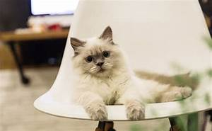 Odeur Urine Chat : comment supprimer l odeur d urine de chat dans la maison ~ Maxctalentgroup.com Avis de Voitures
