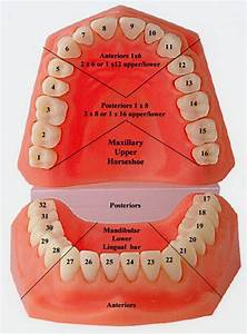Madsculptor  Teeth