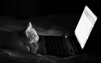 Laptop Cat Cats Humor Bed Monochrome Desktop