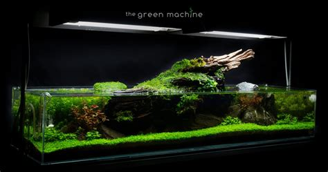 The Green Machine Aquascape by Images The Green Machine