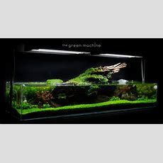 The Green Machine Aquascaping Shop, Aquarium Plants