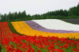 flowers of the month lavender season in hokkaido 2017 visit furano and biei