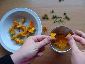 Ringelblumen Creme Selber Machen : die ringelblume verwenden und verwerten garten schaffen ein blog ber den garten ~ Frokenaadalensverden.com Haus und Dekorationen