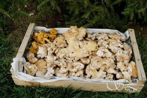 cuisiner pieds de mouton recettes pour pied de mouton chignons saveurs