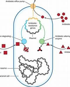 Mechanisms Of Antibiotic Resistance In Bacteria