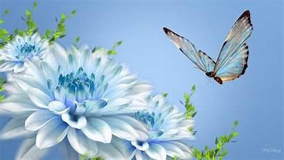 Wallpapers Flower Flowers Background Desktop Butterfly