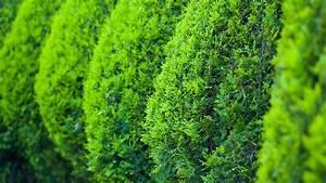 Bäume Und Sträucher Für Den Garten : gartengestaltung beispiele und ideen f r ihre ~ Michelbontemps.com Haus und Dekorationen
