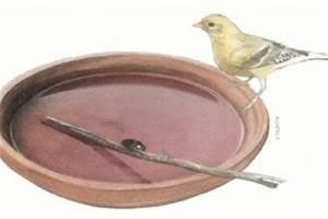 Abreuvoir A Oiseaux Pour Jardin : j 39 installe un abreuvoir dans mon jardin ~ Melissatoandfro.com Idées de Décoration