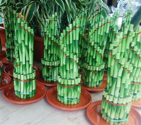 hidroponik tanaman hias bebejacom