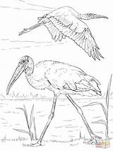 Coloring Wood Storks Printable Stork Drawing Realistic Paper Animals Crafts sketch template