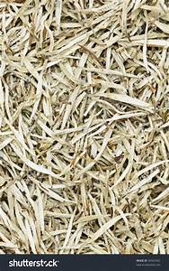 White Tea Leaves Background Texture. Silver Needle Chinese ...