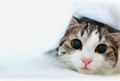 wallpaper kucing lucu terbaru bangiz
