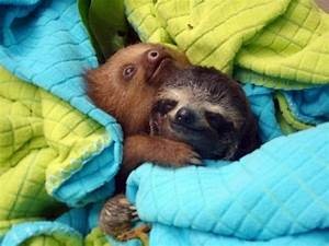 Baby Sloths Hugging | Adorable Animals | Pinterest