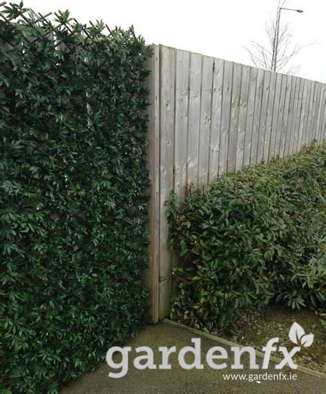 2m Trellis by Artificial Hedge On Expanding Trellis 2m X 1m Evergreen