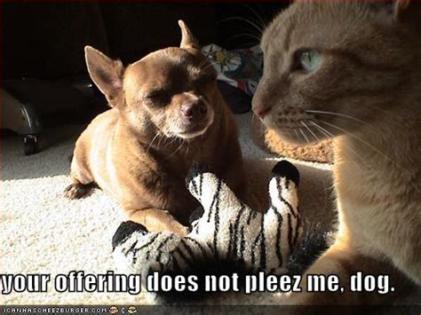 funny picture  captions funny dog pictures