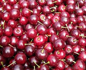 What Is A Morello Cherry   With Pictures