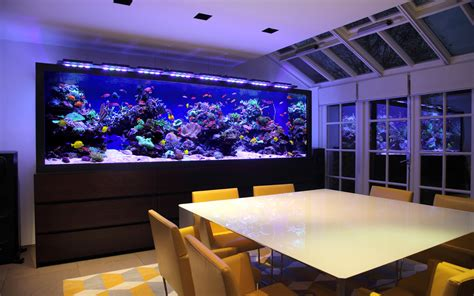 Aquarium Architecture   Custom Aquarium Design