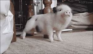Cute Animals GIF - Find & Share on GIPHY