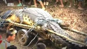 Discovery Channel - Man Eating Super Croc (2013) / AvaxHome