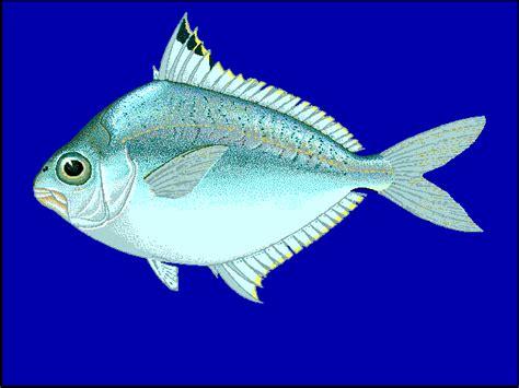 leiognathidae wikipedia