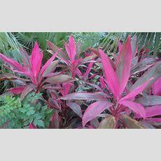 Tropical Plants  Webner House