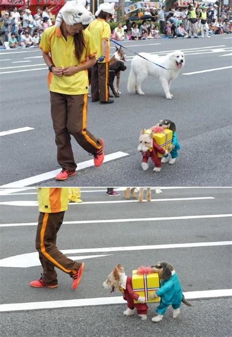 schnelles kostüm für die besten 100 bilder in vielen kategorien hunde die weltbeste verkleidung kost 252 m f 252 r hunde