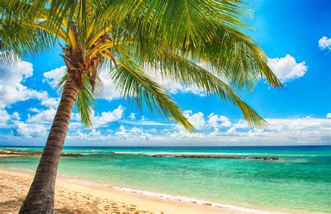 tropical paradise beach palms sea ocean sunshine summer