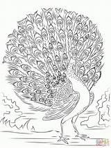 Coloring Peacock Advanced Printable Adult Colouring Detailed Paon Adults Coloriage Bing Kolorowanki Pfau Colorare Volwassenen Mandala Imprimer Pavone Gran Ausmalbilder sketch template