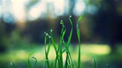 wallpapers de paisajes verdes  el todo en nuestra vida