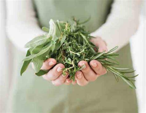 medicinal herbs   grow