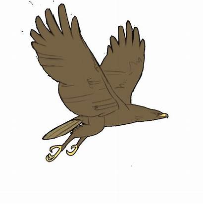Eagle Animation Clipart Flying Cycle Alf Transparent