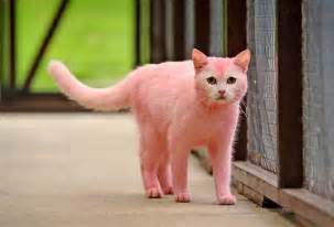 pink cats pink cat cat forum cat discussion forums