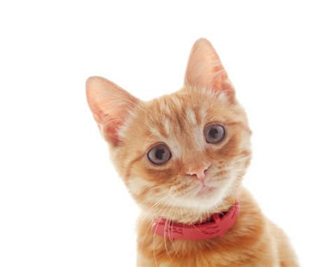care cute cat cats why cuny veterinary expensive reason emergency lifestyle