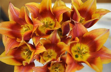 Foto: garšaugi, krāšņas puķes un sēnes izstādē