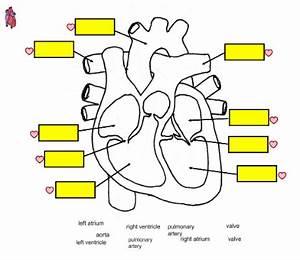Human Heart Diagram Without Labels | www.pixshark.com ...