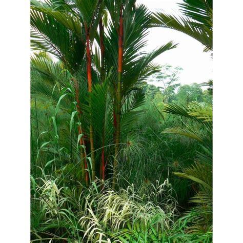 bonsai trees indoor plants garden plants flowers