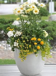 Pflanzen Kübel : pflanzen f r den k bel richtig kombinieren gawina beet ~ Pilothousefishingboats.com Haus und Dekorationen