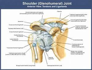 Shoulder Rehabilitation  Shoulder Injuries  Dislocation