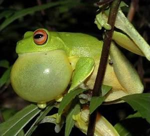 Frog croaking bubble   Bubbles   Pinterest