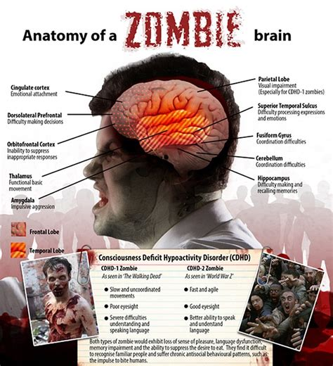 zombie brain anatomy zombies science outbreak humanity survival apocalypse reveal undead neuroscientists could scientists survive wipe infected avoid which being