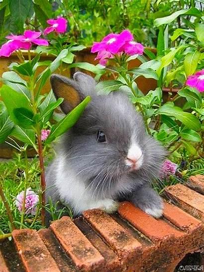 Spring Animals Bunny Bunnies Garden Flowers Rabbits