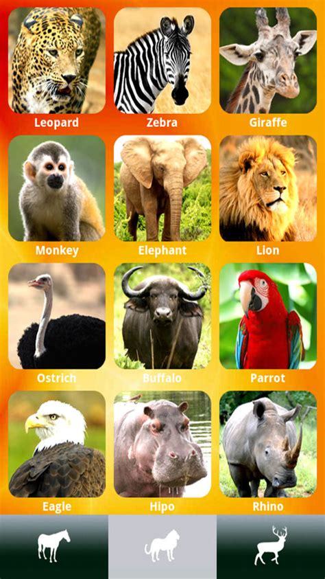 amazoncom zoola  animal app  kids appstore