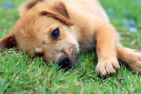 hunde kausnacks fuer glueckliche und gesunde lieblinge