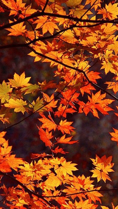 Autumn Wallpaper  Halloween Cell Phone Wallpaper